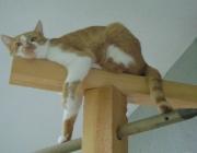 Katzenbetreuung Wien - Katzen Bewegung / Das Zusammenspiel der äusserst leistungsfähigen Sinne Gehör, Sehvermögen und Geruchssinn, ist der Schlüssel zu ihrem Jagderfolg.