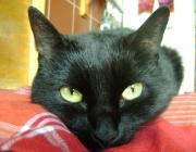 Tierbetreuung Wien - Betreute Katzen