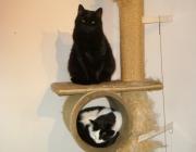 Katzen - Betreuung