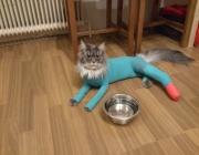 Katzenbetreuung Wien - Betreute Katze