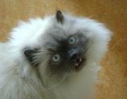 Katzen (Felis silvestris catus) - Sie benötigt außerdem ein Kratzbrett oder einen Kratzbaum, um dem Kratzbedürfnis der Katze nachzukommen. Dazu eignet sich z.B. ein Holzbrett mit einem übrig gebliebenen Stück Schlingen-Teppichboden oder ein Baumstamm mit einer Mindesthöhe von einem Meter.