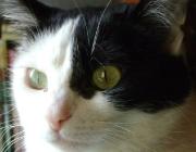 Katzen (Felis silvestris catus) - So gesellig die Katzen im Einzelfall auch sein mögen, auf die Jagd gehen sie alleine. Ganz im Gegensatz zum Rudel der Wölfe und Wildhunde.