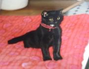 Katzen (Felis silvestris catus) - Sichern Sie Ihren Balkon ebenfalls mit einem Gitter oder feinmaschigen Netzen.