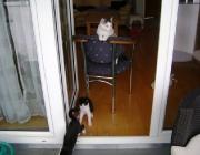 Katzenbetreuung Wien - Kitten / Mit einem Geburtsgewicht von ca. 100g kommen die Katzenbabies (meist 3-6 pro Wurf) zur Welt.