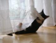 Katzenbetreuung Wien - Junge Katzen / Ihr Entdeckerdrang ist praktisch unbegrenzt und ihre neue Umgebung wird bis ins kleinste Detail erforscht und alles wird ausprobiert.