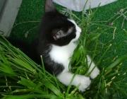 Katzenbetreuung Wien - Junge Katzen / Bei der Geburt wissen Katzen noch gar nicht, dass sie Katzen sind.