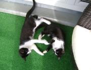 Katzenbetreuung Wien - Kätzchen / Man sollte jedoch seiner Katze ganz klar verdeutlichen, was sie darf und was nicht.