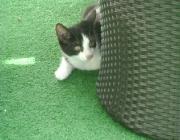 Katzenbetreuung Wien - Kätzchen / Aber auch die lernfähigste Katze wird niemals einem Befehl gehorchen, der für sie unangenehme Folgen hat oder den sie mit etwas unangenehmem verbindet.