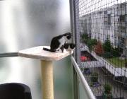 Katzenbetreuung Wien - Katzenbaby / Belohnen sie die Katze während oder (wenn sie das Verhalten nicht unterbrechen wollen) sofort nach dem Verhalten, damit sie merkt, warum sie belohnt wird.