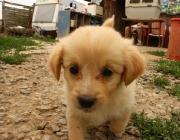 Hundewelpe - Ein Welpe muss erzogen werden, damit später ein gutes Verhältnis zwischen ihm und seinen Besitzern herrschen kann.