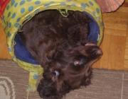 Mobile Tierbetreuung - Hundebetreuung Stieglecker