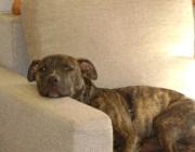 Hundebetreuung Wien - Welpen / Was der Welpe in diesen Phasen erlebt, prägt sich nahezu unauslöschlich in sein Gehirn.