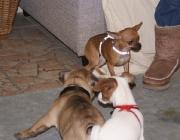Hundebetreuung Wien - Welpen / Sie sind voll und ganz auf die Hilfe der Hundemutter angewiesen.