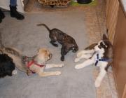 Hundebetreuung Wien - Welpen / Nach etwa 63 Tagen Tragezeit wird ein Welpe geboren.