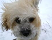 Hundebetreuung Wien - Welpen / Auch die Sozialisierung mit anderen Heimtieren ist jetzt möglich.