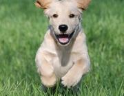 Hundebetreuung Wien - Welpen / In dieser Zeit müssen Welpen engen Kontakt zu verschiedenen Menschen haben, um viele gute Erfahrungen zu sammeln.